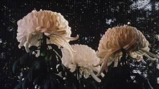 あつもの杢平の秋-Trailer