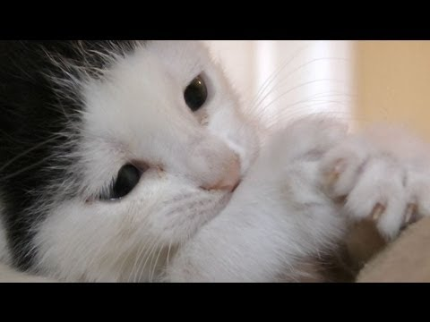 The CuteIts Too Much. Meet Pancake, The Cutest Kitten Of All Time