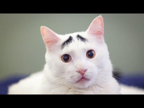 sam: il gattino con le sopracciglia!