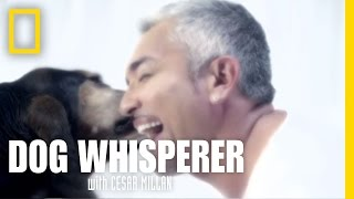 Dog Whisperer: New Season Starts July 7