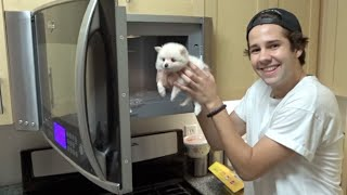 Download Youtube: PUTTING A PUPPY INTO THE MICROWAVE!! | David Dobrik