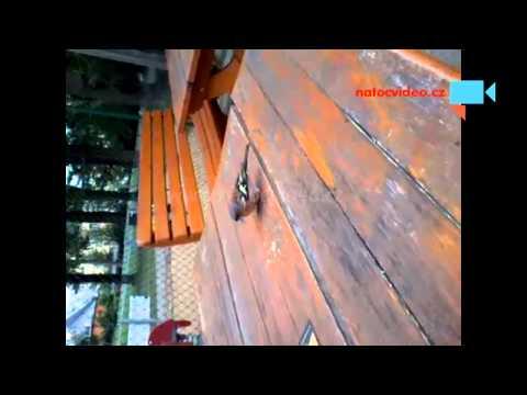 Brambůrkový ptáček vrabčáček