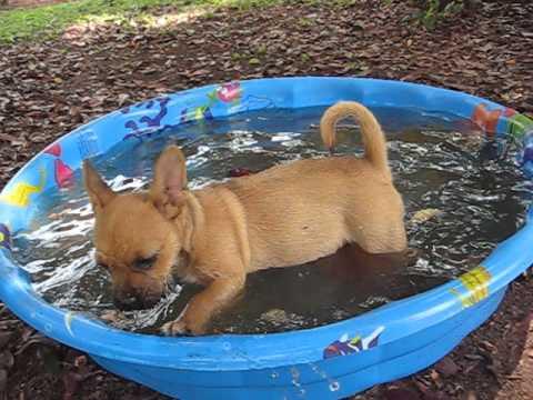 Gobi playing in her swimming pool