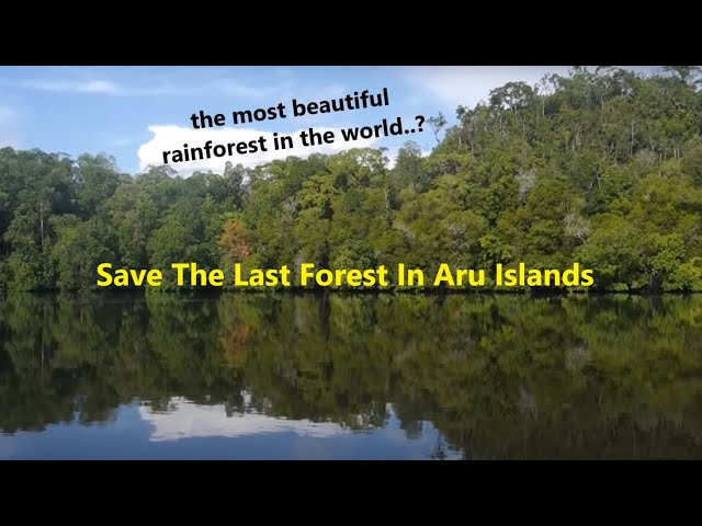 Save The Last Forest In Aru Islands with English sub
