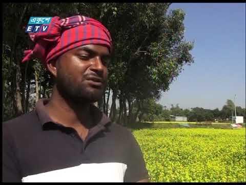 জামালপুরে সরিষার ফলন ভালো হয়েছে | ETV News