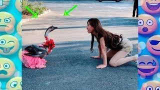 Video FUNNY Videos 2018 People doing stupid things  compilation#33 Try not to laugh MP3, 3GP, MP4, WEBM, AVI, FLV Juli 2018