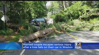 A large tree fell on a truck with a married couple inside on Friday in Weston.