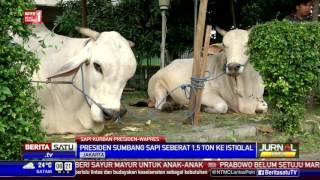 Video Jokowi-JK Sumbang Sapi Seberat 2,8 Ton ke Masjid Istiqlal MP3, 3GP, MP4, WEBM, AVI, FLV Agustus 2019