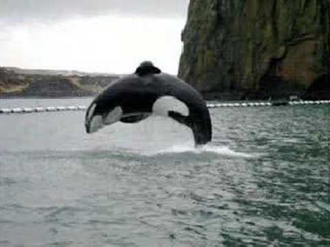 0 Free Willy