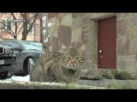 Чи готові рівняни впустити котів у свої підвали? [ВІДЕО]