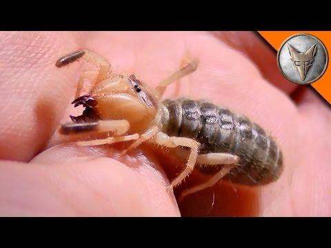 Creepy Desert Creatures! (видео)
