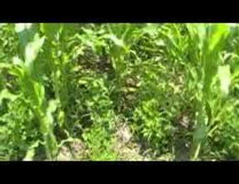 Survival Gardening Part 1  Peak Oil, Food Storage, Prepper, Survivalist, Economic Collapse, Doomsday