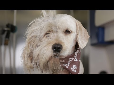 Homeless Dog Gets Makeover That Saves His Life%21 - Charlie