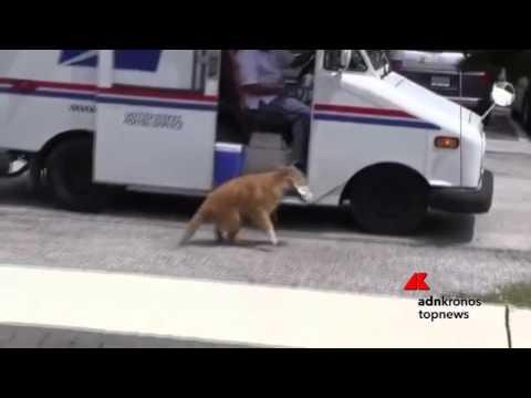 attende l'arrivo del furgoncino e il cane fa il suo dovere!