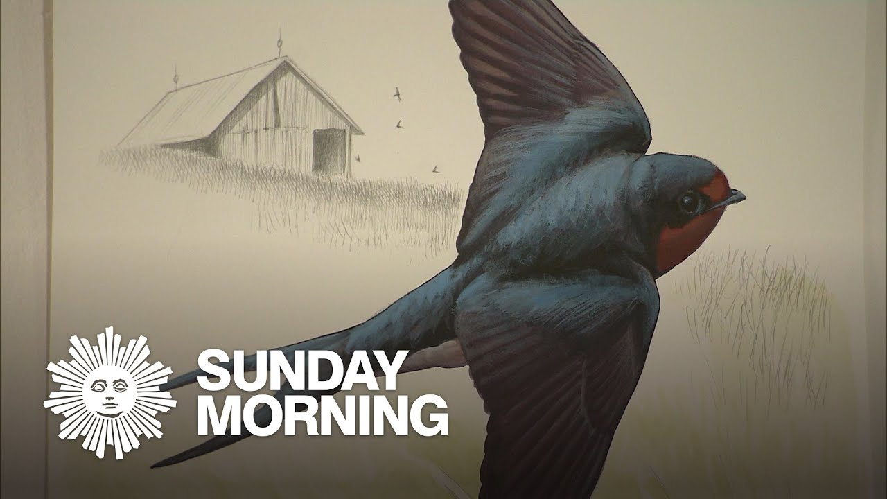 CBS Sunday Morning | Artist David Sibley: For the birds