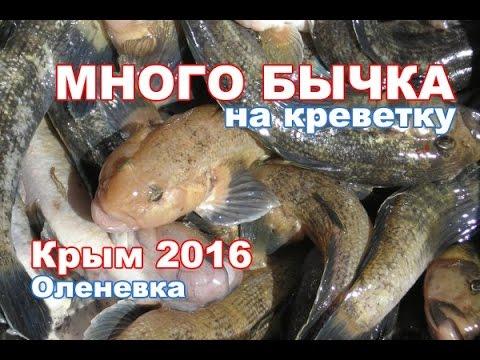 прогноз клева рыбы уни кировской