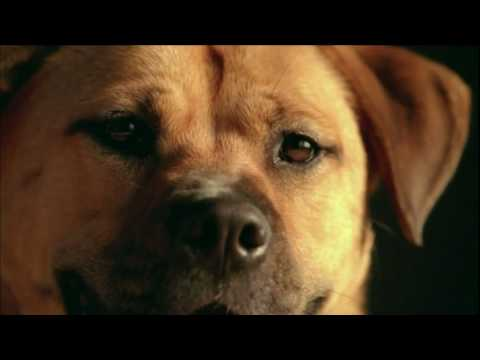 Pedigree Dog Commercial - Shelter Dog