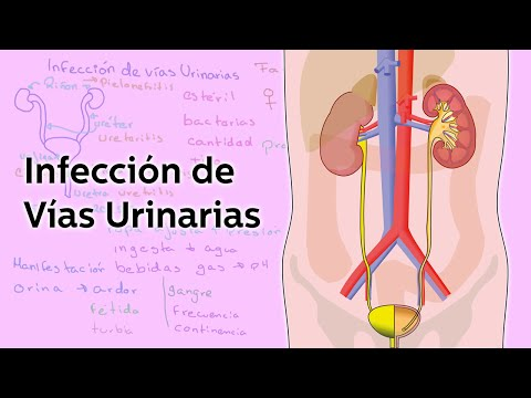 Infección de Vías Urinarias - Salud - Educatina