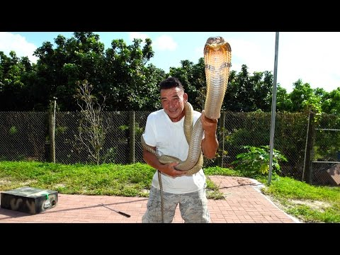 Video Snake Whisperer Has One Of The Most Dangerous Jobs In The World download in MP3, 3GP, MP4, WEBM, AVI, FLV January 2017