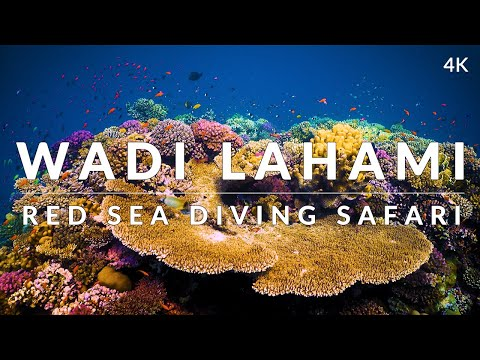 This is Wadi Lahami, Fury Shoals (4k)
