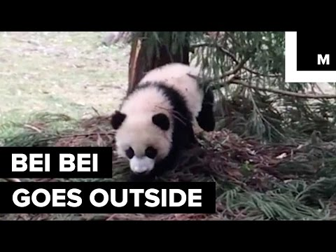 VIDEO: Bei Bei tackles the great outdoors