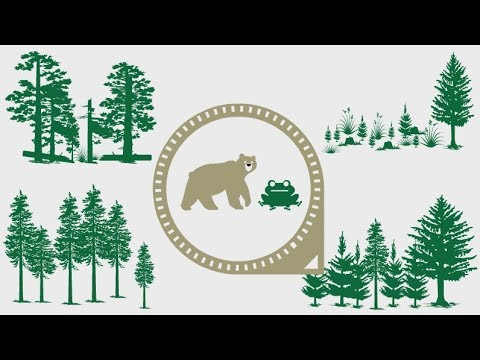 Forest Fact Break - Wildlife