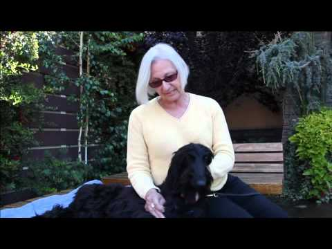 Afghan Hound Rescue Fundraiser