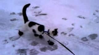 Proper Way To Walk A Cat Outside In Winter