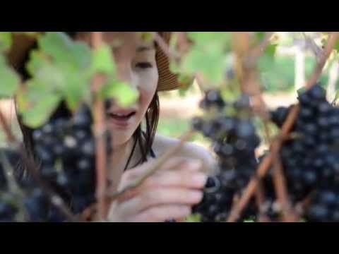 Niagara Vintage Wine Tours - Best Wine Tours Niagara Canada | Corporate Packages