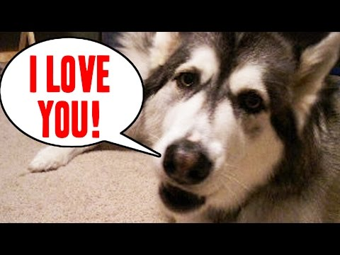 """pets - You've never heard """"I love you"""" like this before. Like BuzzFeedVideo on Facebook: http://on.fb.me/18yCF0b -------------------------- All Media Courtesy of AF..."""