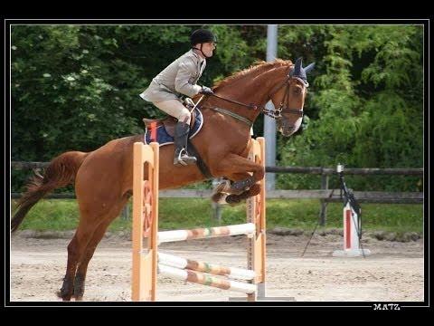 Cheval, course hippique saut d'obstacle