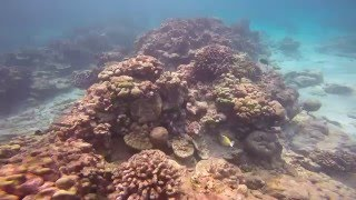 Christmas Island has been in the middle of a massive coral bleaching event. Georgia Tech scientist Kim Cobb, dove on the reef in early April to document the ...