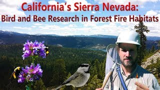 A documentary exploring what I and my fellow researchers were researching in a post fire area in the Sierra Nevada. Specifically we will be looking at mercury ...