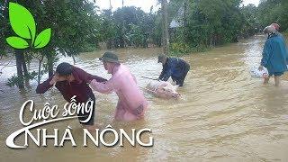 Khi mưa lũ về - CSNN 323