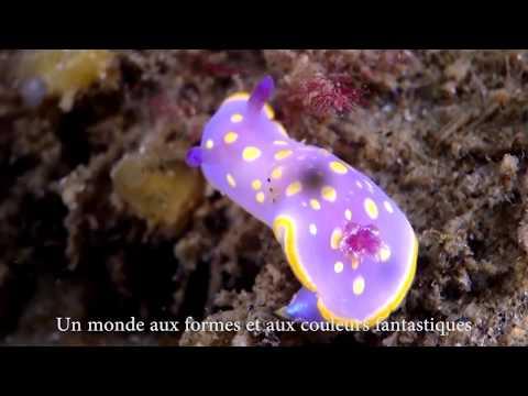[Interview] En quête des nudibranches du Bassin d'Arcachon !
