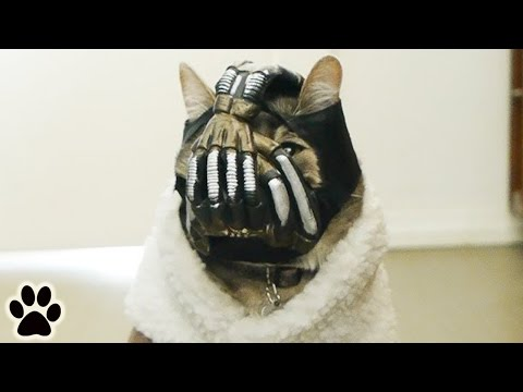 Super Villian Cat