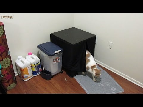 The ultimate cat litter box system - Storm, the cat, demonstrates