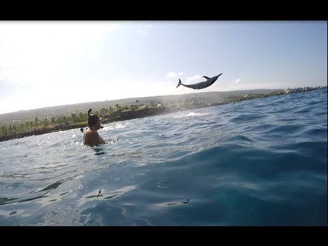 Hey Dolphin, Do a Triple Barrel Roll!