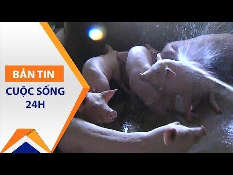 Hà Tĩnh: Người nuôi lợn chưa được cứu | VTC1 - Thời lượng: 3 phút, 15 giây.