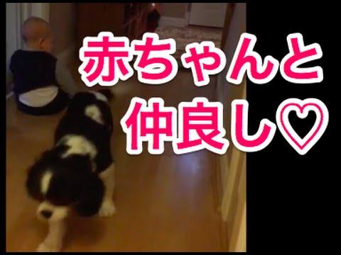 犬 赤ちゃん 動画   犬犬動画の...