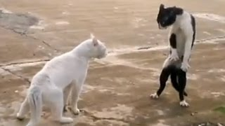 Funny Cats - Compilation