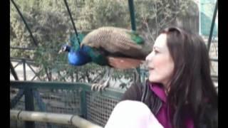 Dec 11, 2010 ... 3:41. 5 Momentos Increibles Captados en el Zoologico! - Duration: 3:58. Top 5s nInfinitos 108,625 views. New · 3:58 · 5 ZOOLÓGICOS MAIS...