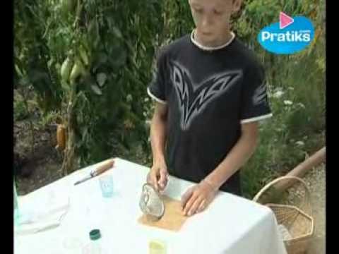 Comment prélever les graines d'une tomate ?