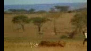 Hungry Ethiopian Very Funny