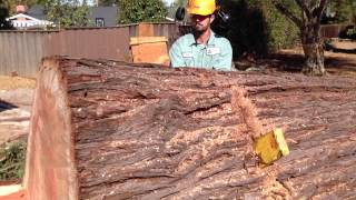 Nonton Awesome Big Redwood Removal And Mill Job Film Subtitle Indonesia Streaming Movie Download