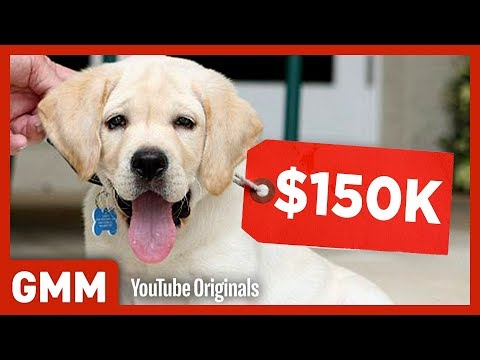 Most Expensive Pets on Earth (GAME) - Thời lượng: 8:02.