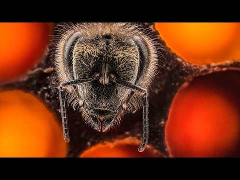 First 21 Days Of Bee  s Life In 60Second Timelapse