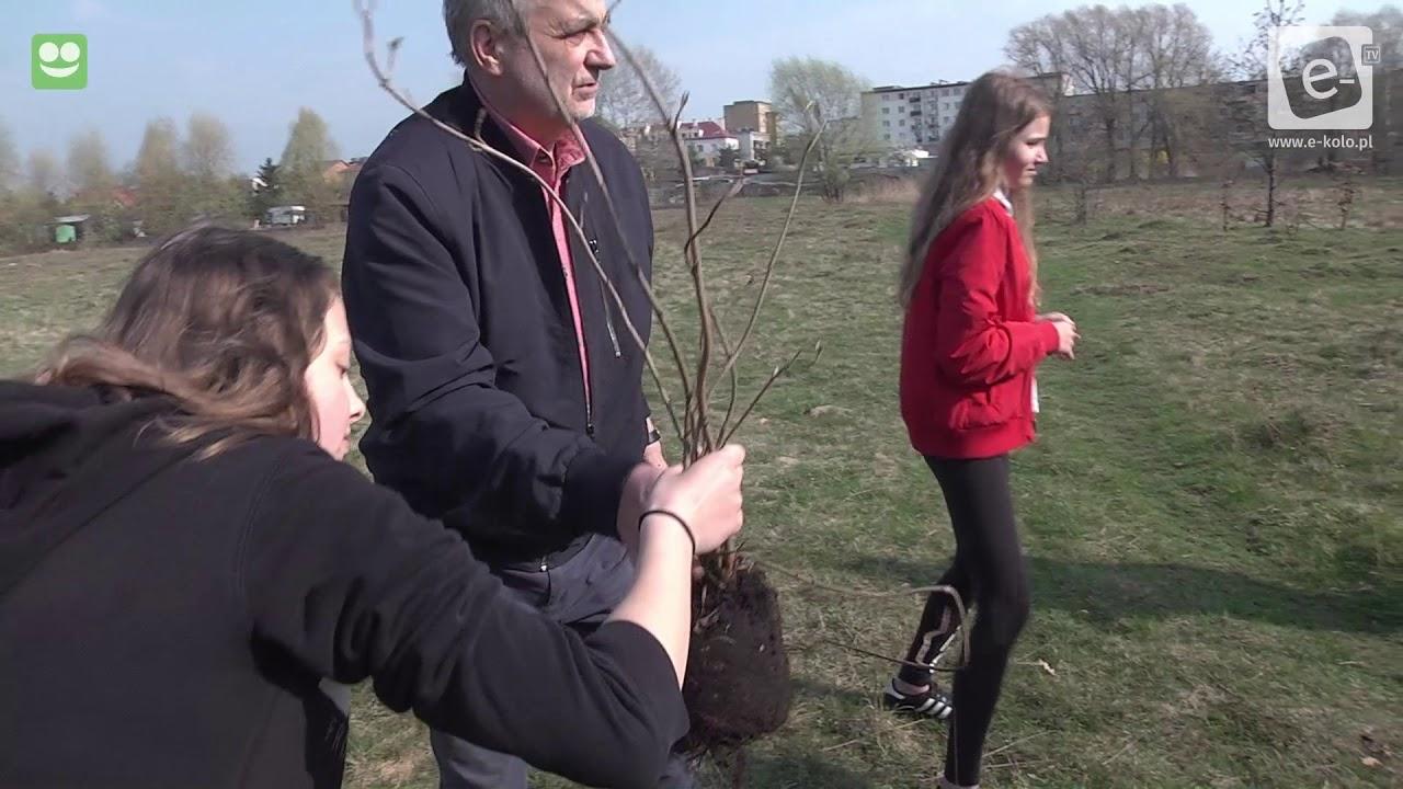 Posadzili drzewa na kolskich błoniach