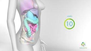 Video Perubahan yang berlaku pada Badan anda semasa mengandung MP3, 3GP, MP4, WEBM, AVI, FLV November 2017