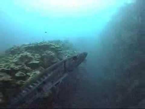 Buceando en Belize